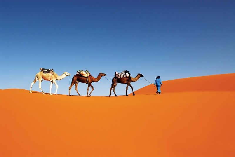 Adventure Tours & Desert Experience